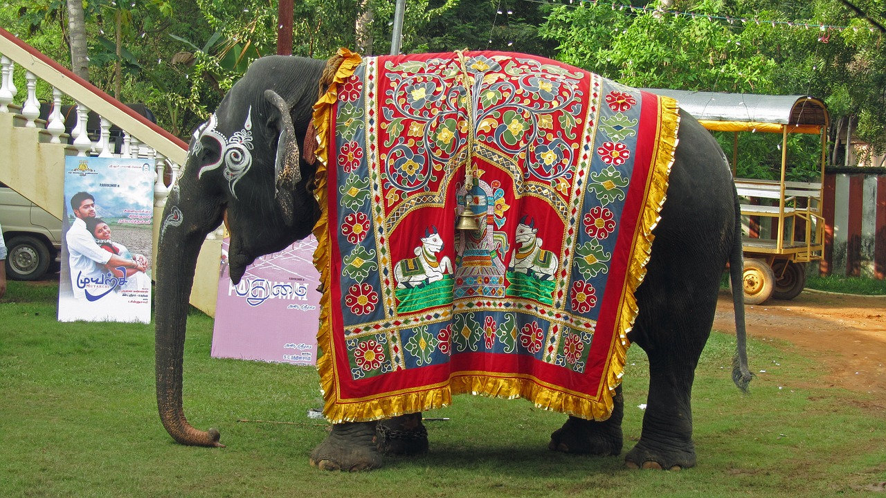 Temple elephant,india,hinduism,holy,ornament - free image from ...