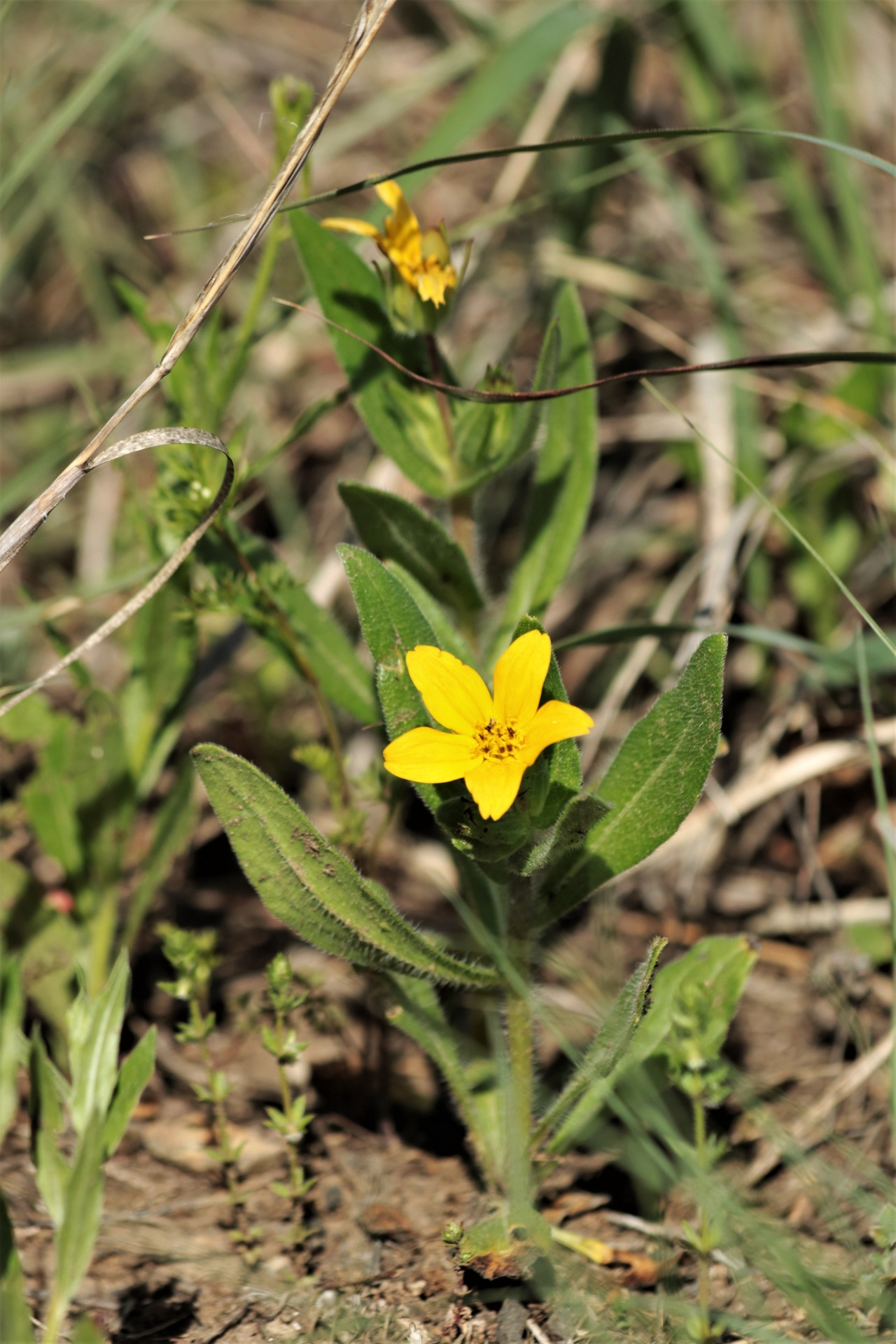 Natureflowersyellownbspflowerswildflowersyellownbsp nature flowers yellowampnbspflowers mightylinksfo