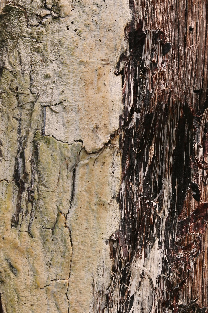 texture wood weathered free photo