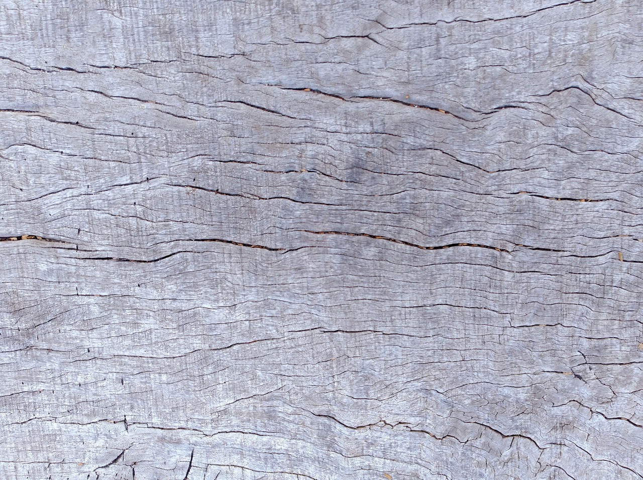 texture wood tree free photo