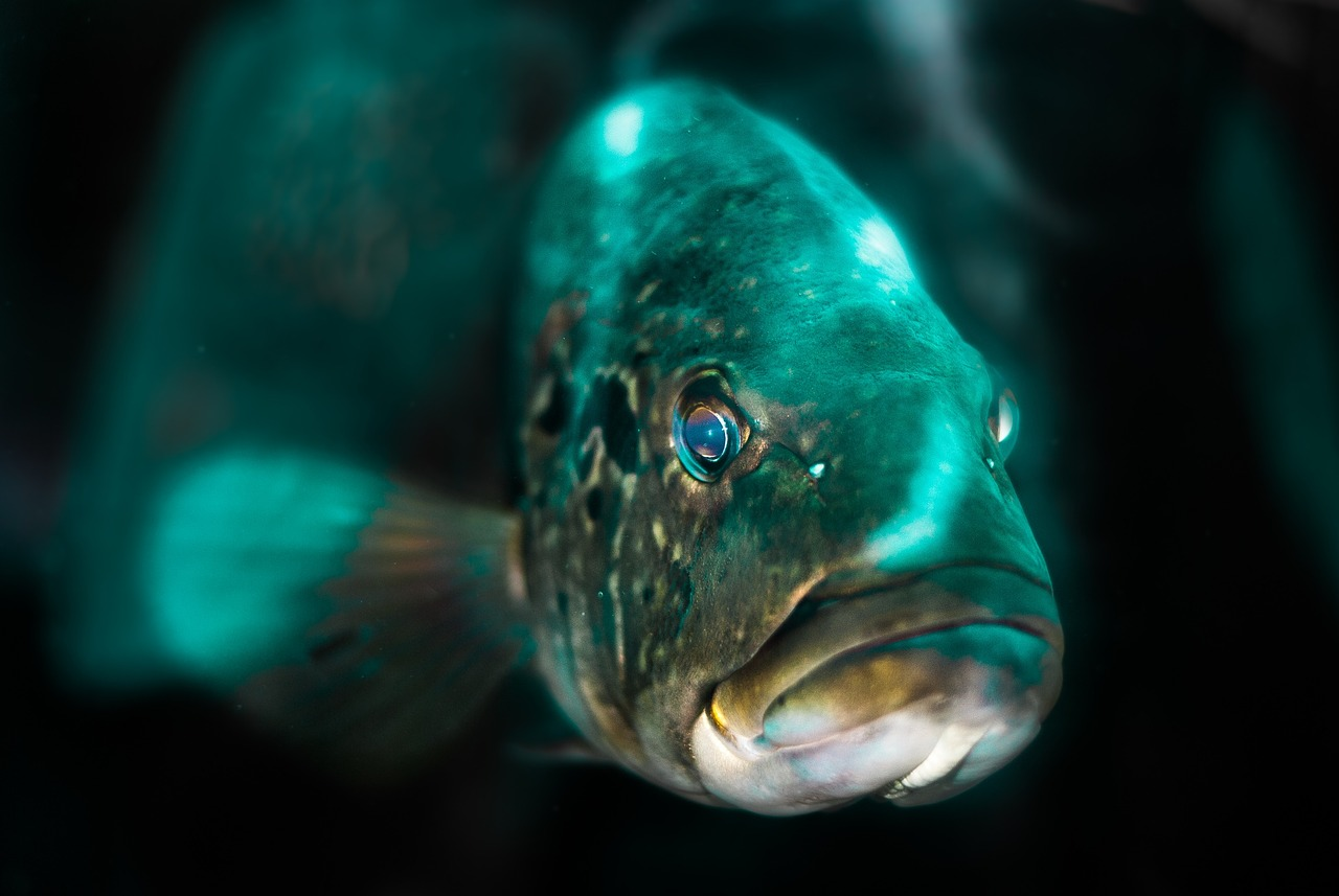 The Light Shines In The Aquarium Increases The Beauty In Fish Azure