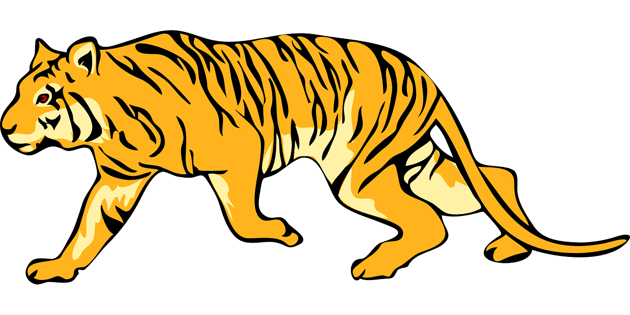 tiger,stripes,animal,tail,mammal,hunting,stalking,stalk,cat,wild,wildlife,striped,predator,carnivore,free vector graphics,free pictures, free photos, free images, royalty free, free illustrations, public domain