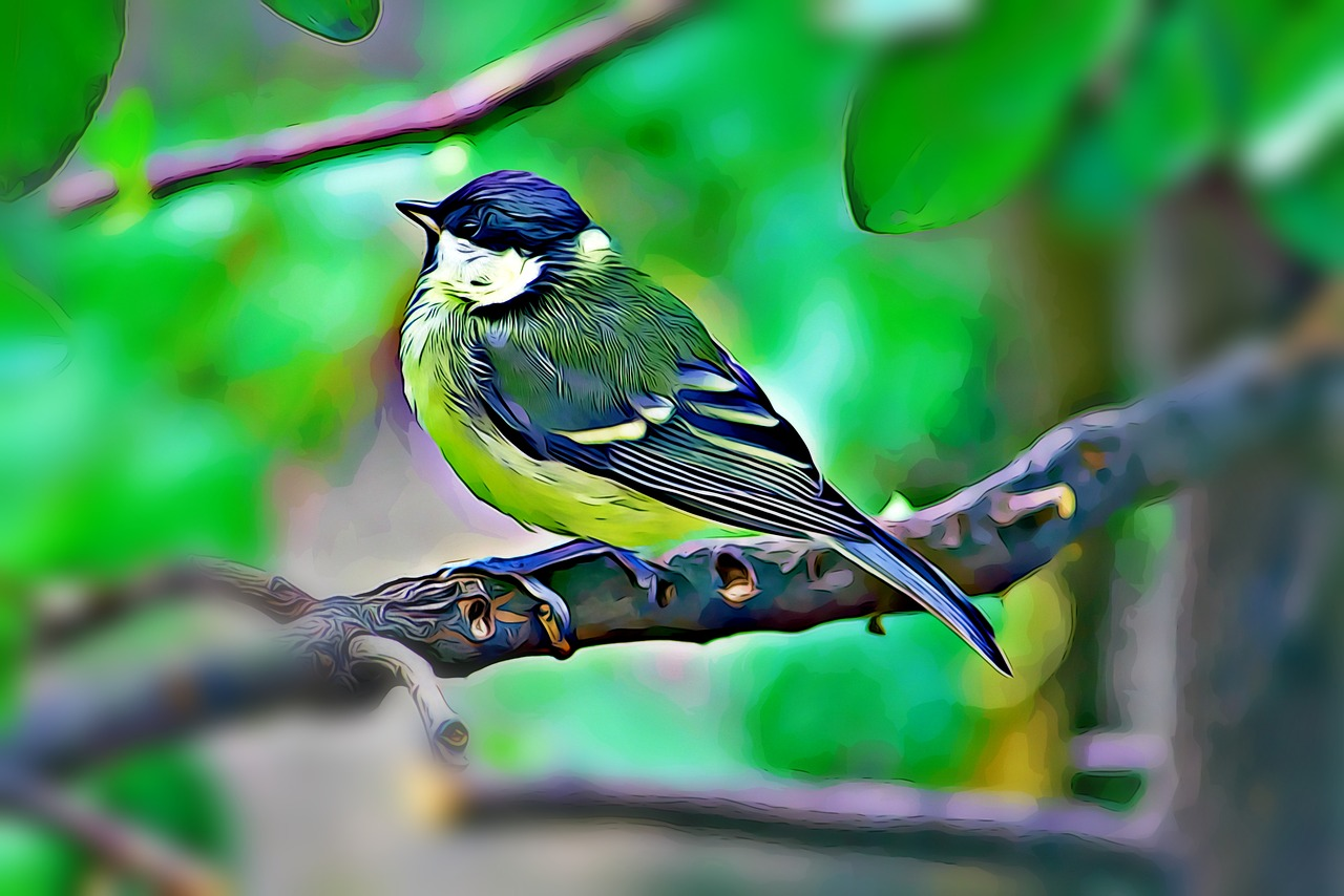 titmouse spring summer free photo