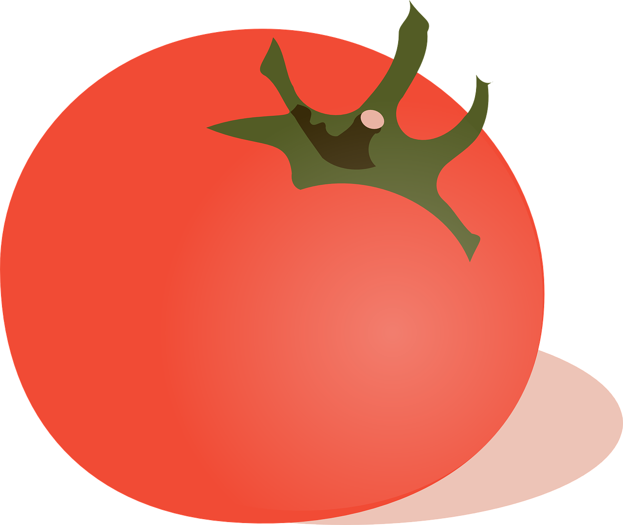 tomato vegetable red free photo