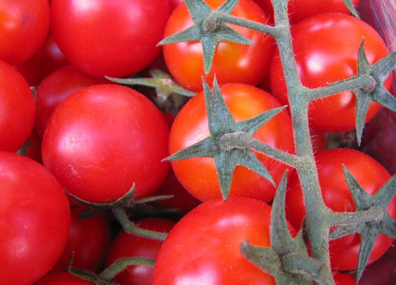 tomatoes red vegetables free photo