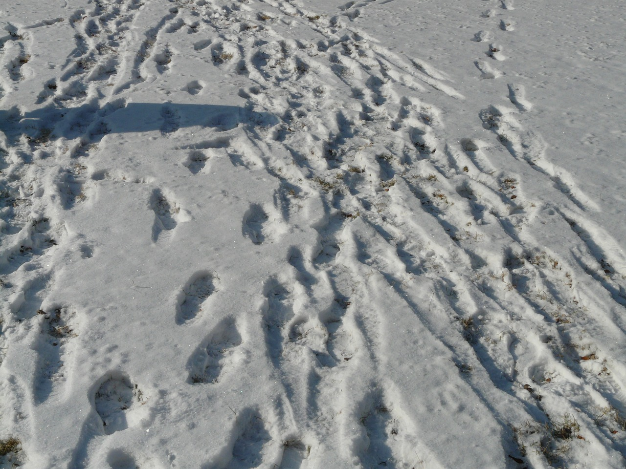traces snow wintry free photo