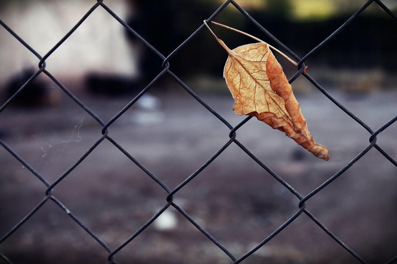 trapped,dry leaf,dry,wiring,wire,hooked,metal,free pictures, free photos, free images, royalty free, free illustrations, public domain