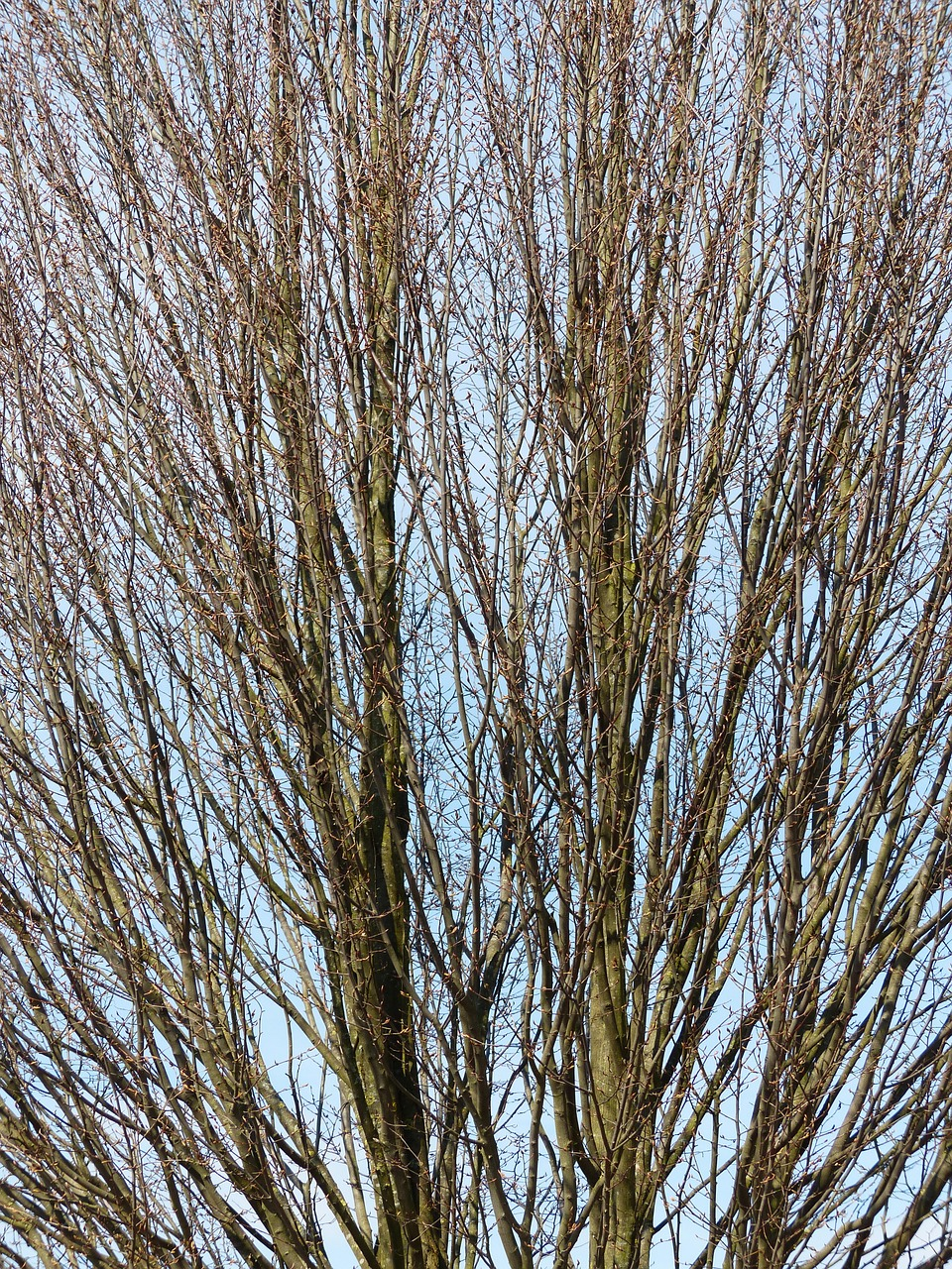 tree branches nature free photo