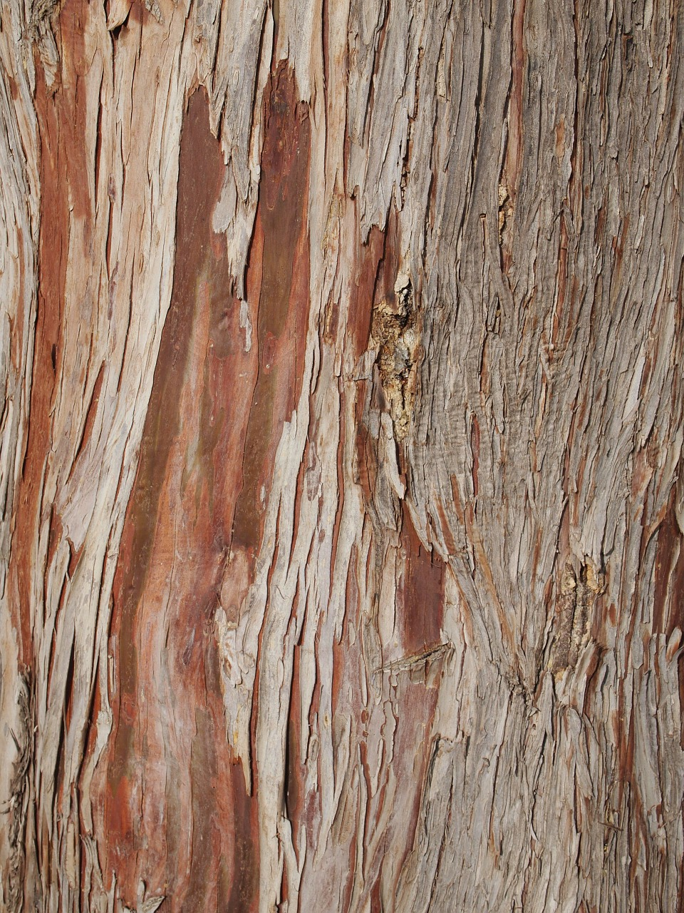 tree bark wood free photo