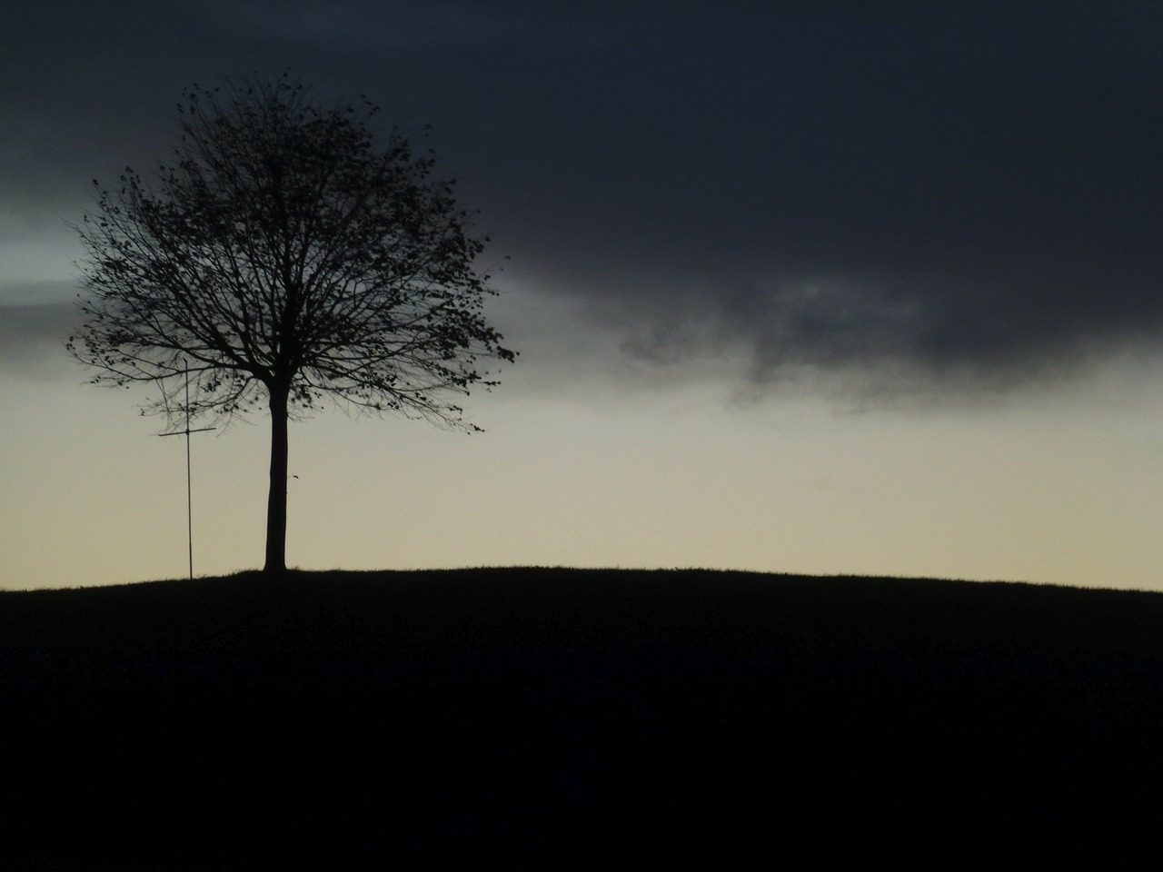tree,landscape,fog,evening,free pictures, free photos, free images, royalty free, free illustrations, public domain