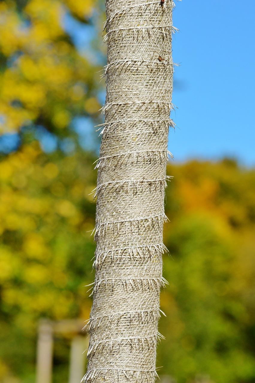 Tree Trunk Protector >> Tree Tree Protection Trunk Protection Tree Trunk Protector