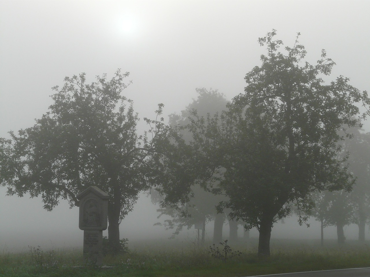 tree trees fog free photo