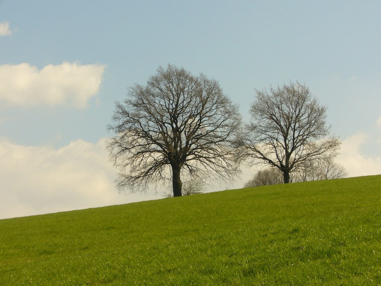 tree meadow nature free photo