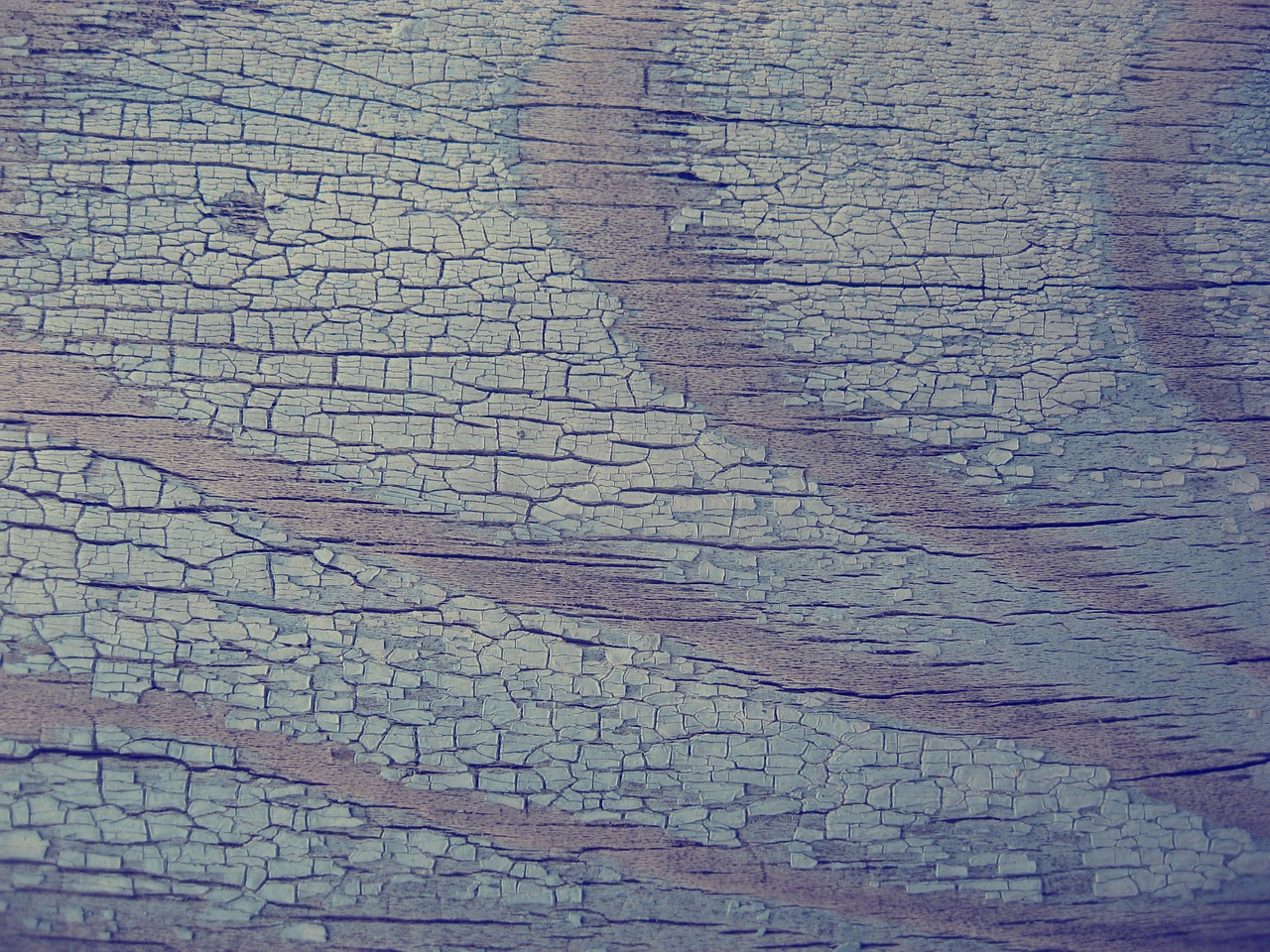 tree texture closeup free photo