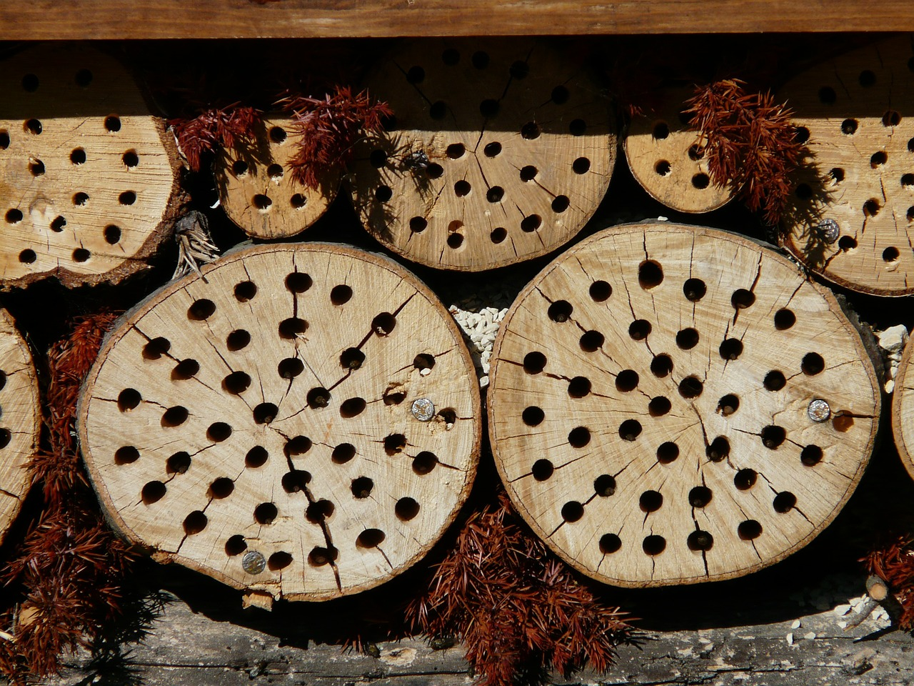 tree grates drill holes insect hotel free photo