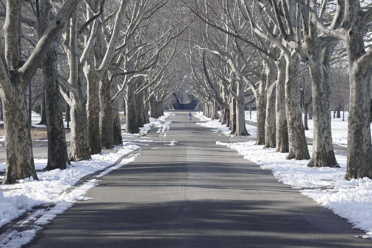tree lined flushing meadow park snow free photo