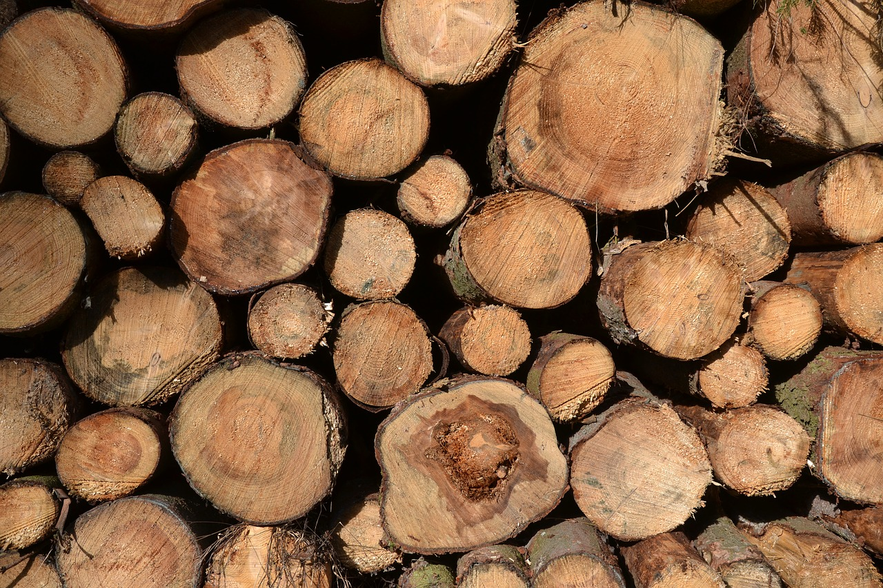 tree trunks timber timber industry free photo