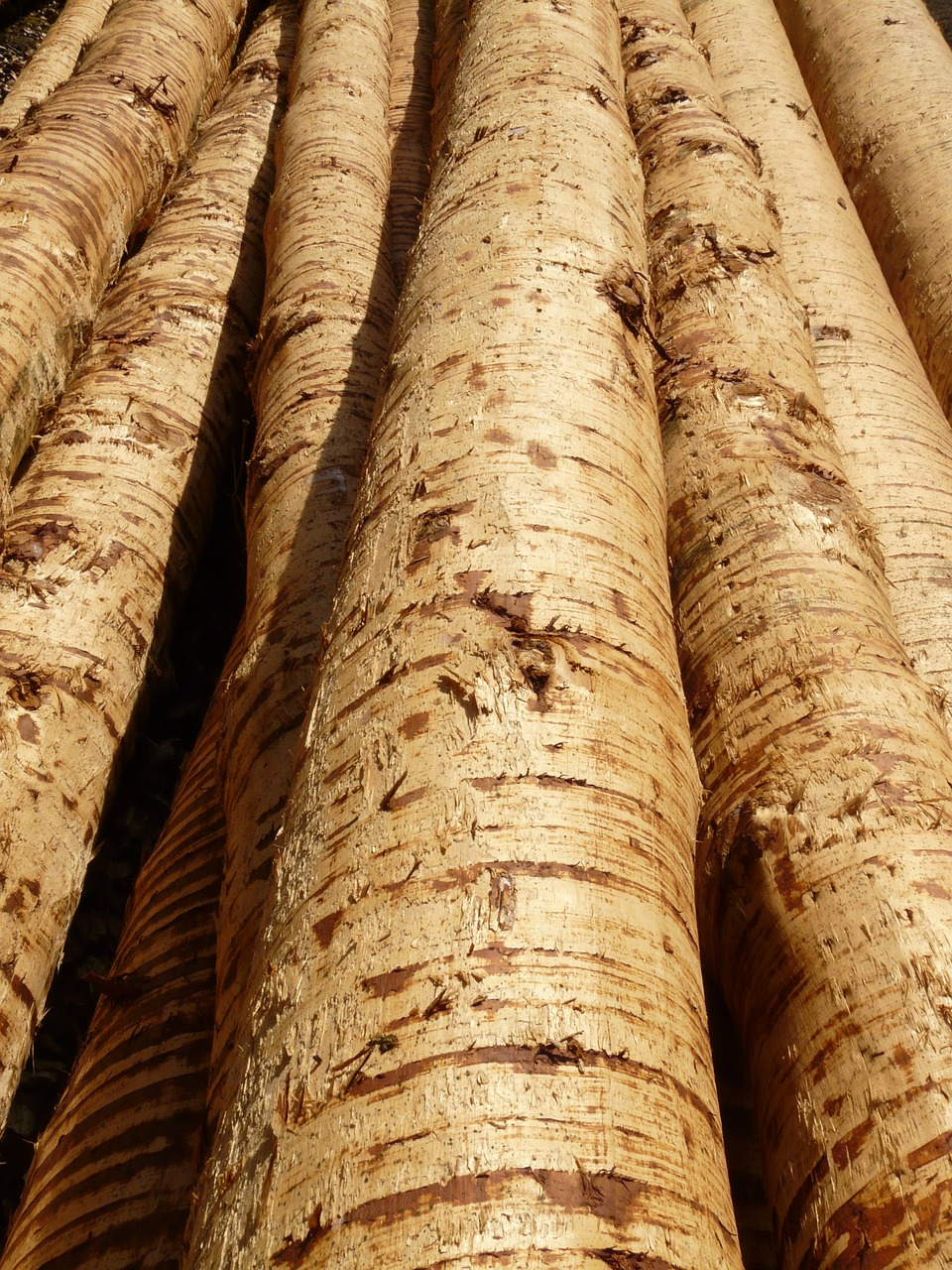 tree trunks,wood,tribe,timber,bark,material,nature,forest,tree,free pictures, free photos, free images, royalty free, free illustrations, public domain