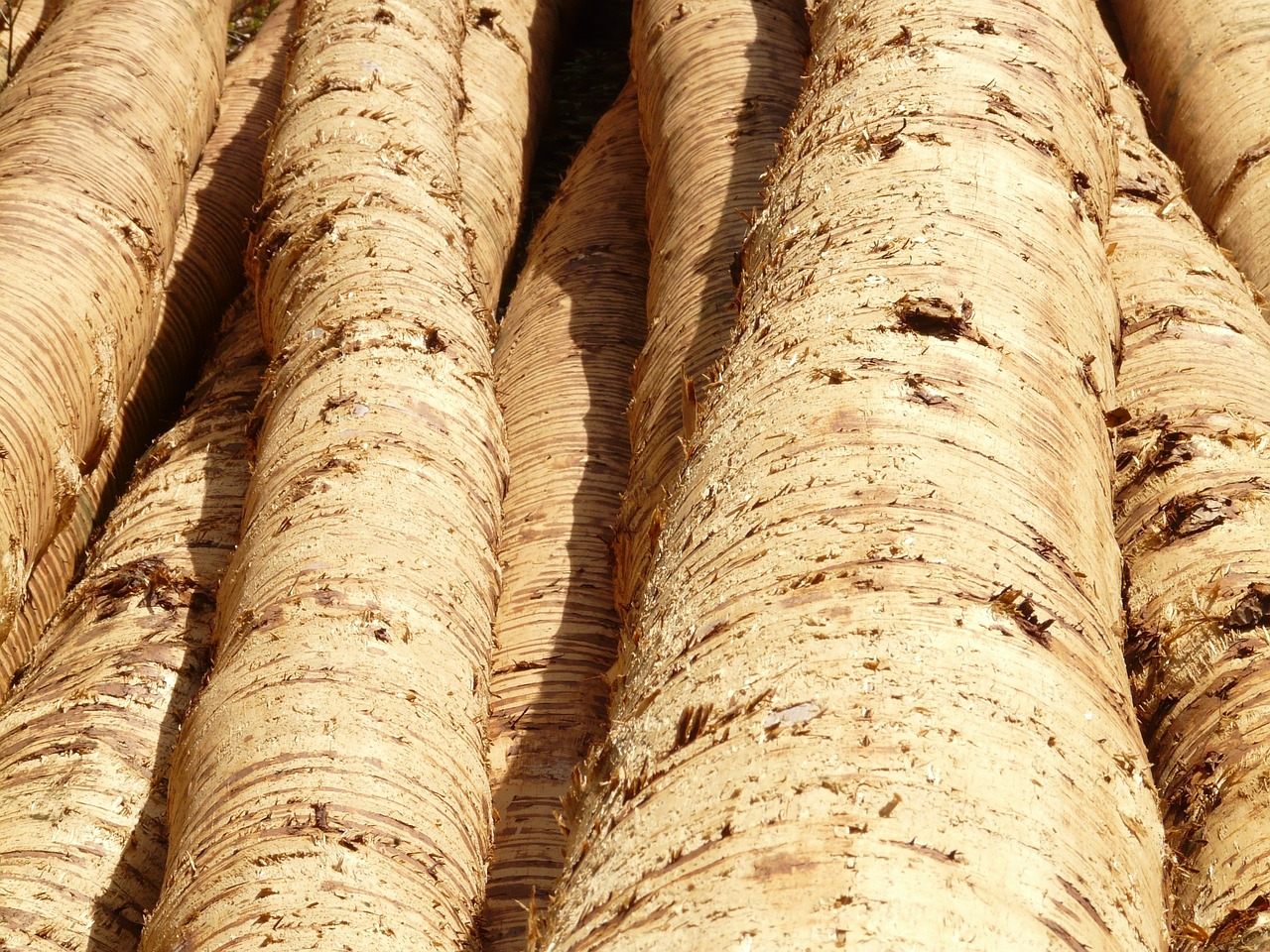 tree trunks wood tribe free photo