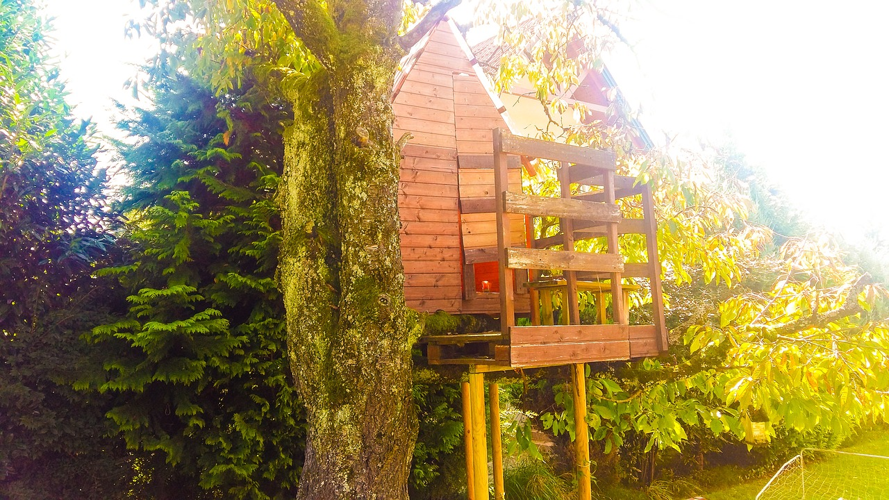treehouse autumn tree free photo