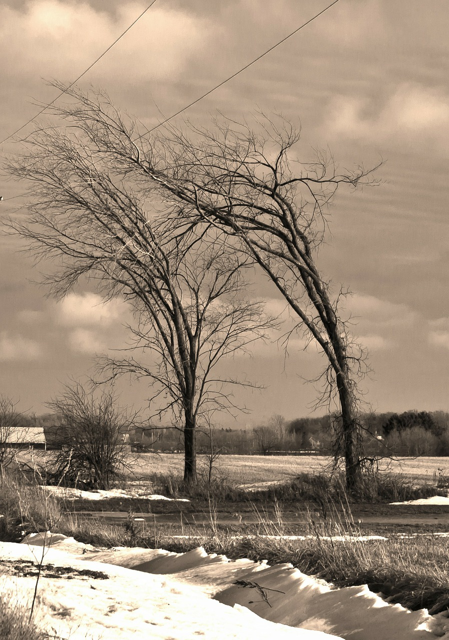 trees wind winter free photo