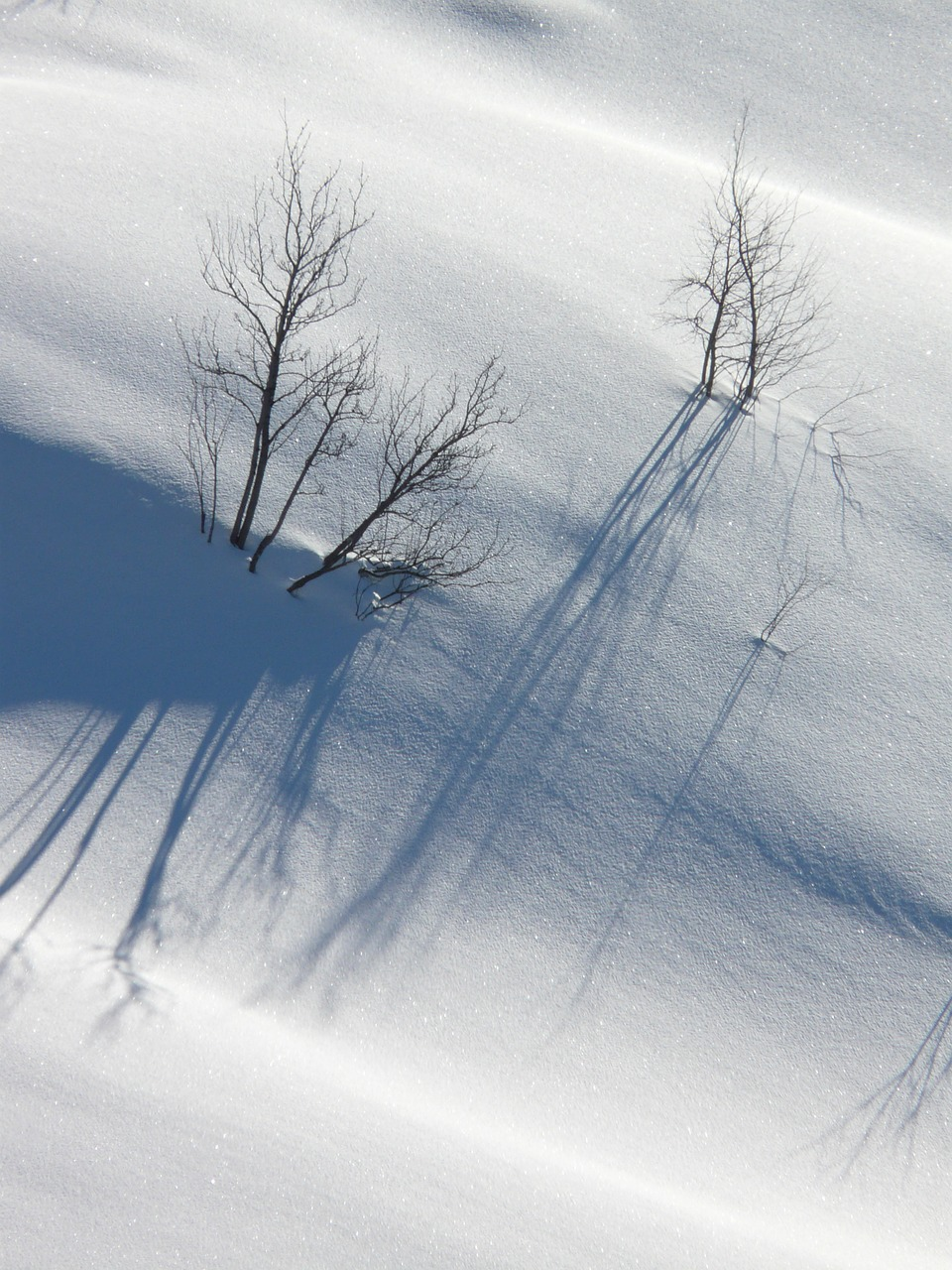trees snow lonely free photo