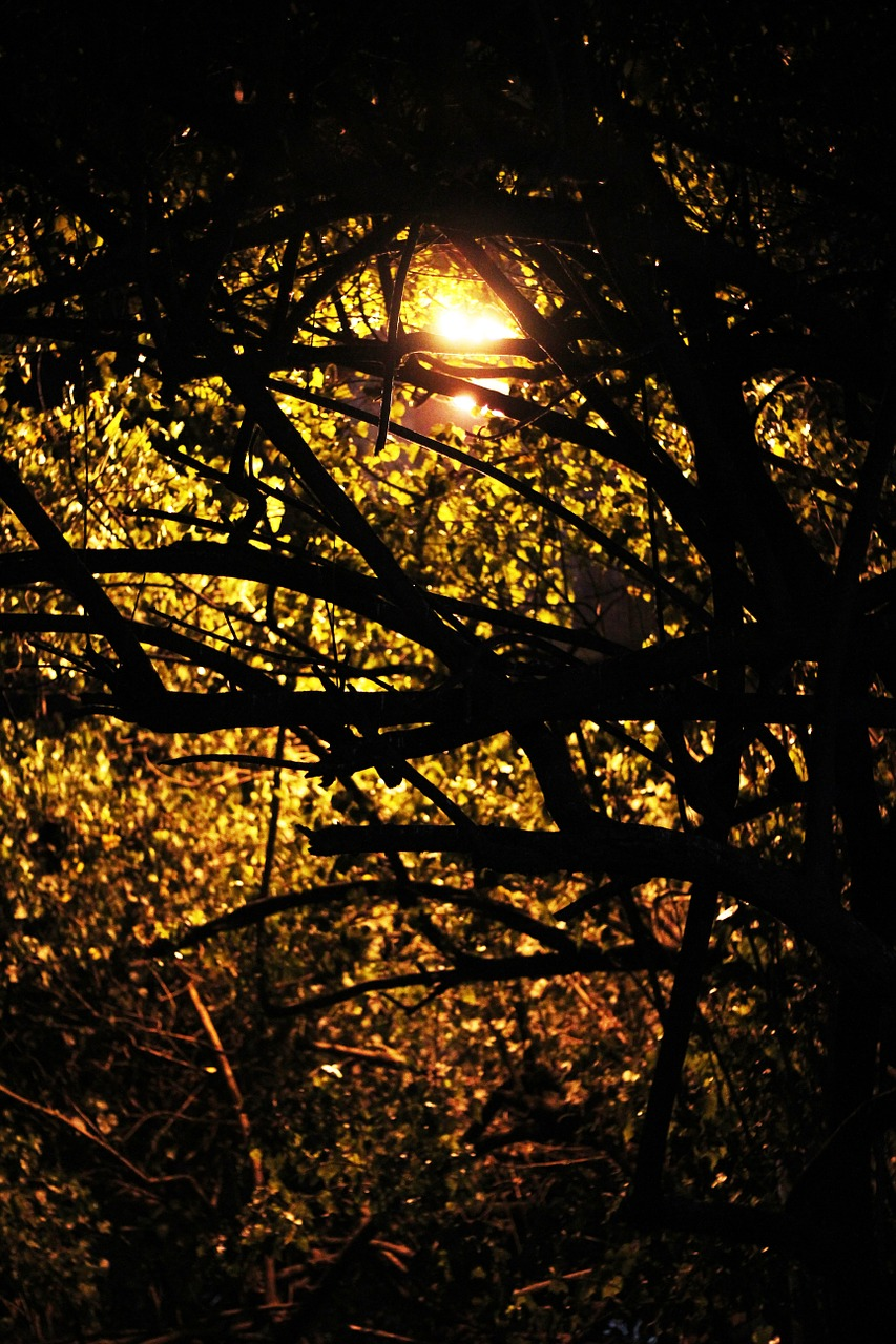 trees branches twilight free picture
