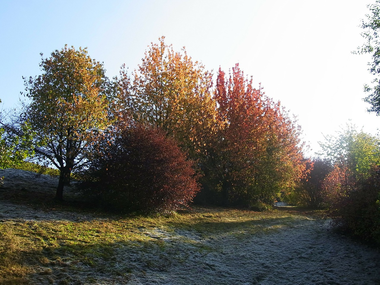 trees autumn frost free photo