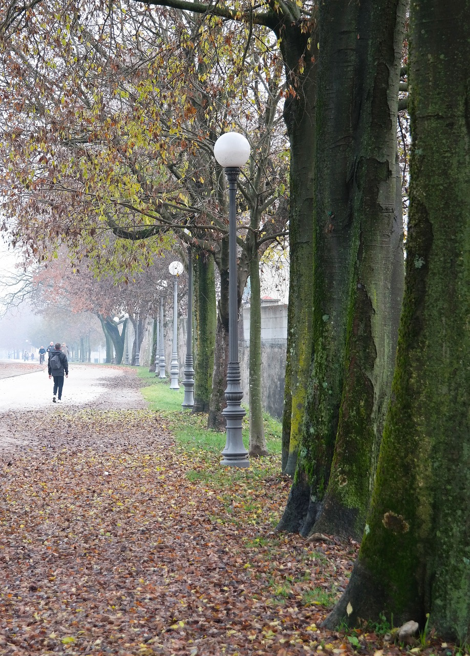trees,road,winter,walk,fog,day,walkway,italy,lucca,go,lamps,cloudy,free pictures, free photos, free images, royalty free, free illustrations, public domain