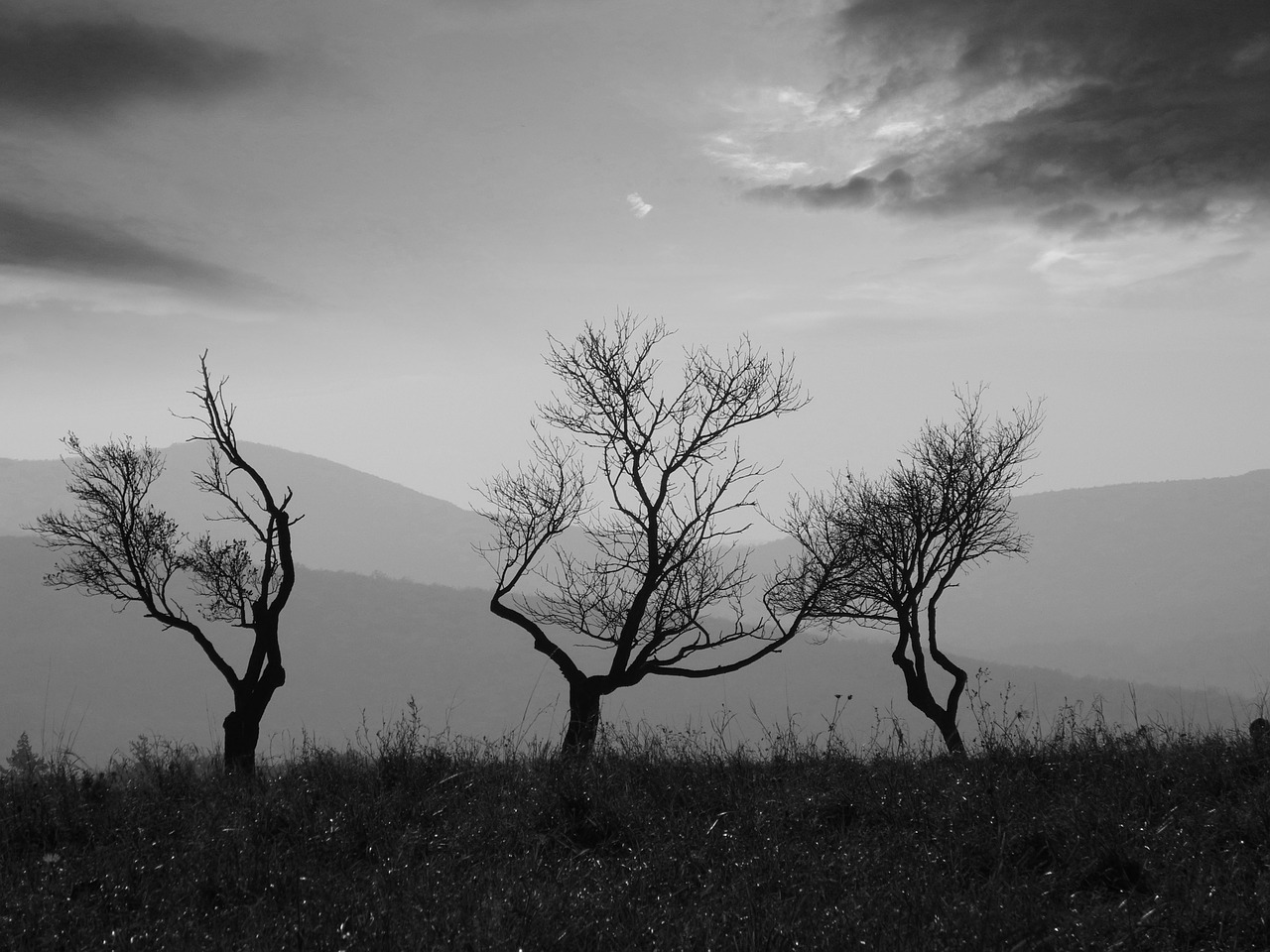 trees black and white kahl free photo