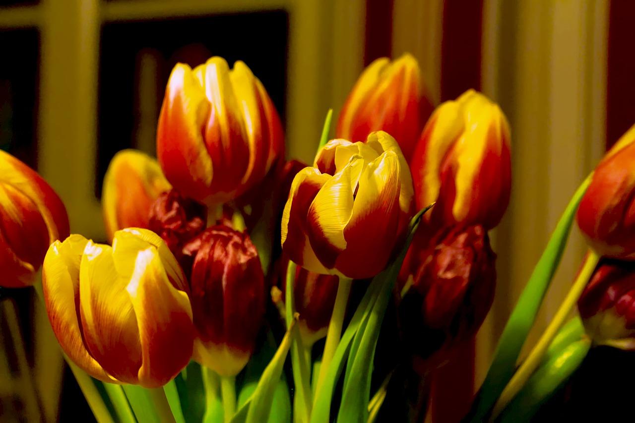 Tulipsspringstraussspring Flowertulip Bouquet Free Photo From