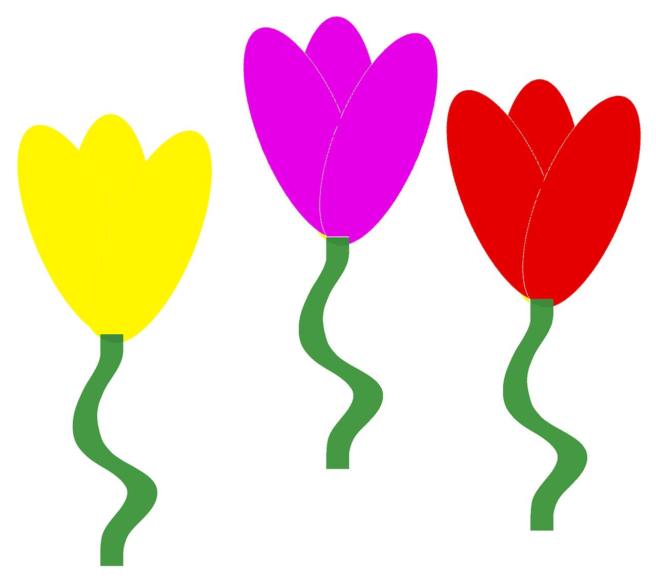 Tulipsflowersspring Flowersflowers Backgroundfree Illustrations