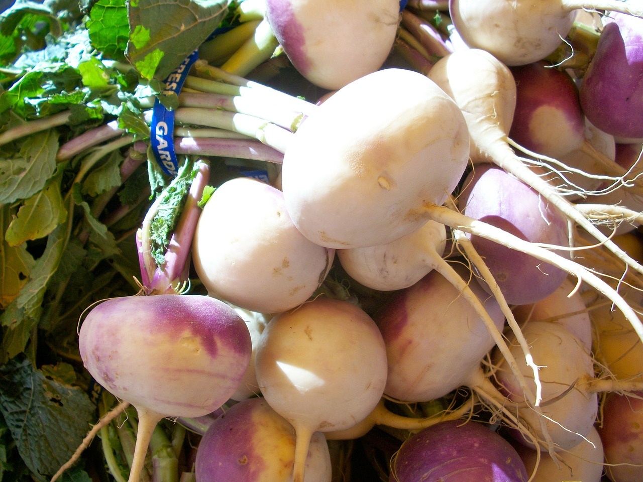 turnips vegetables root free picture