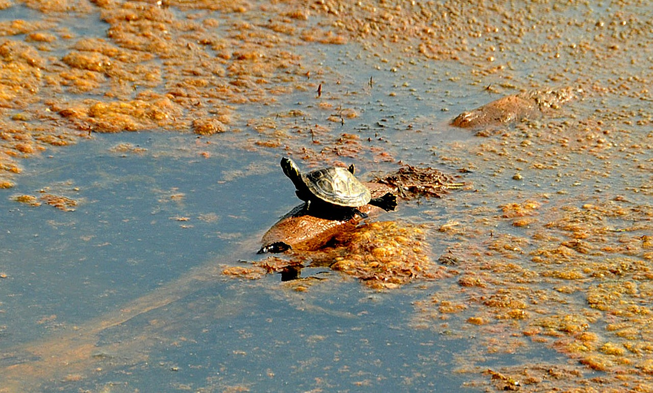 turtle stretch legs free photo