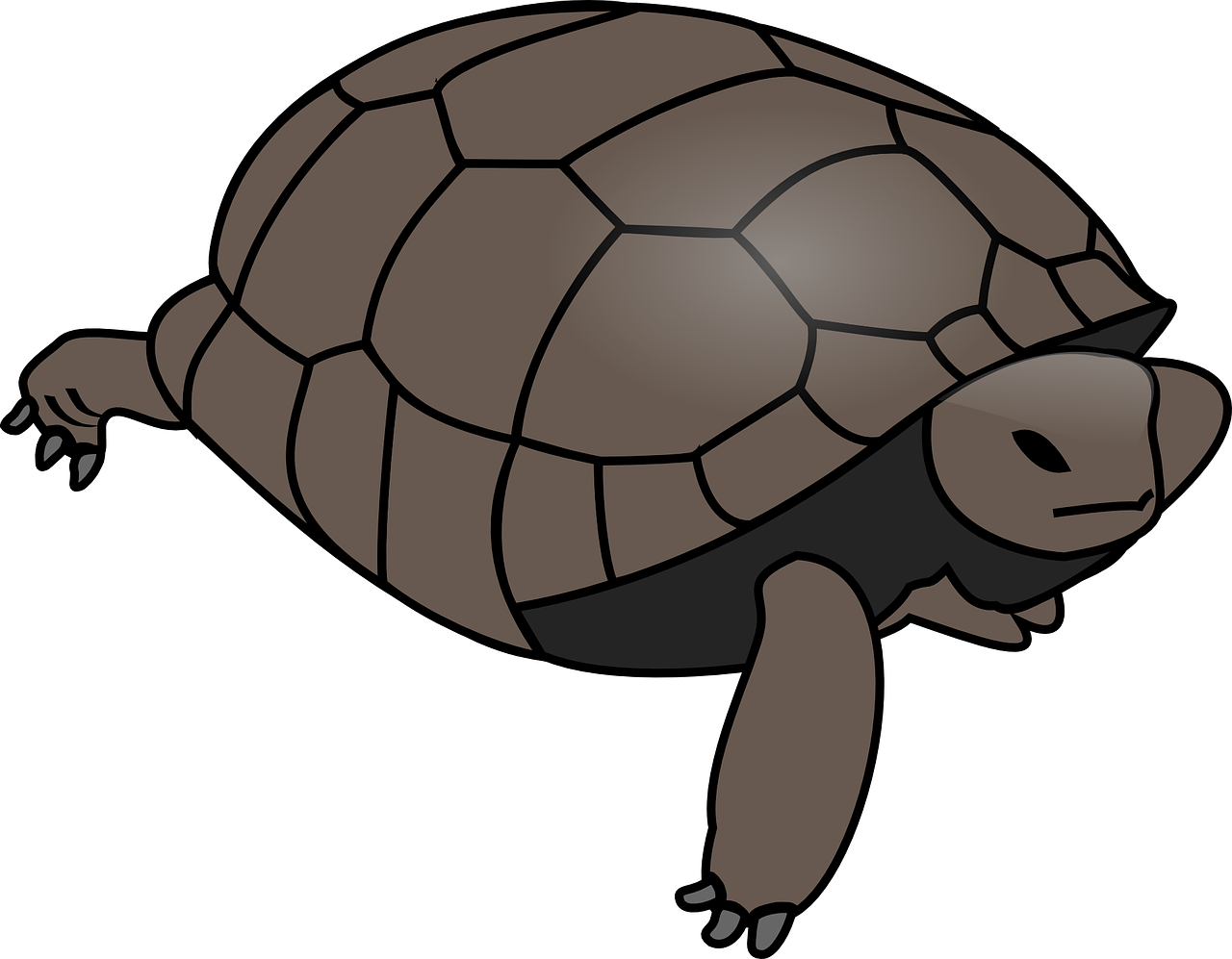 turtle tortoise reptile free photo