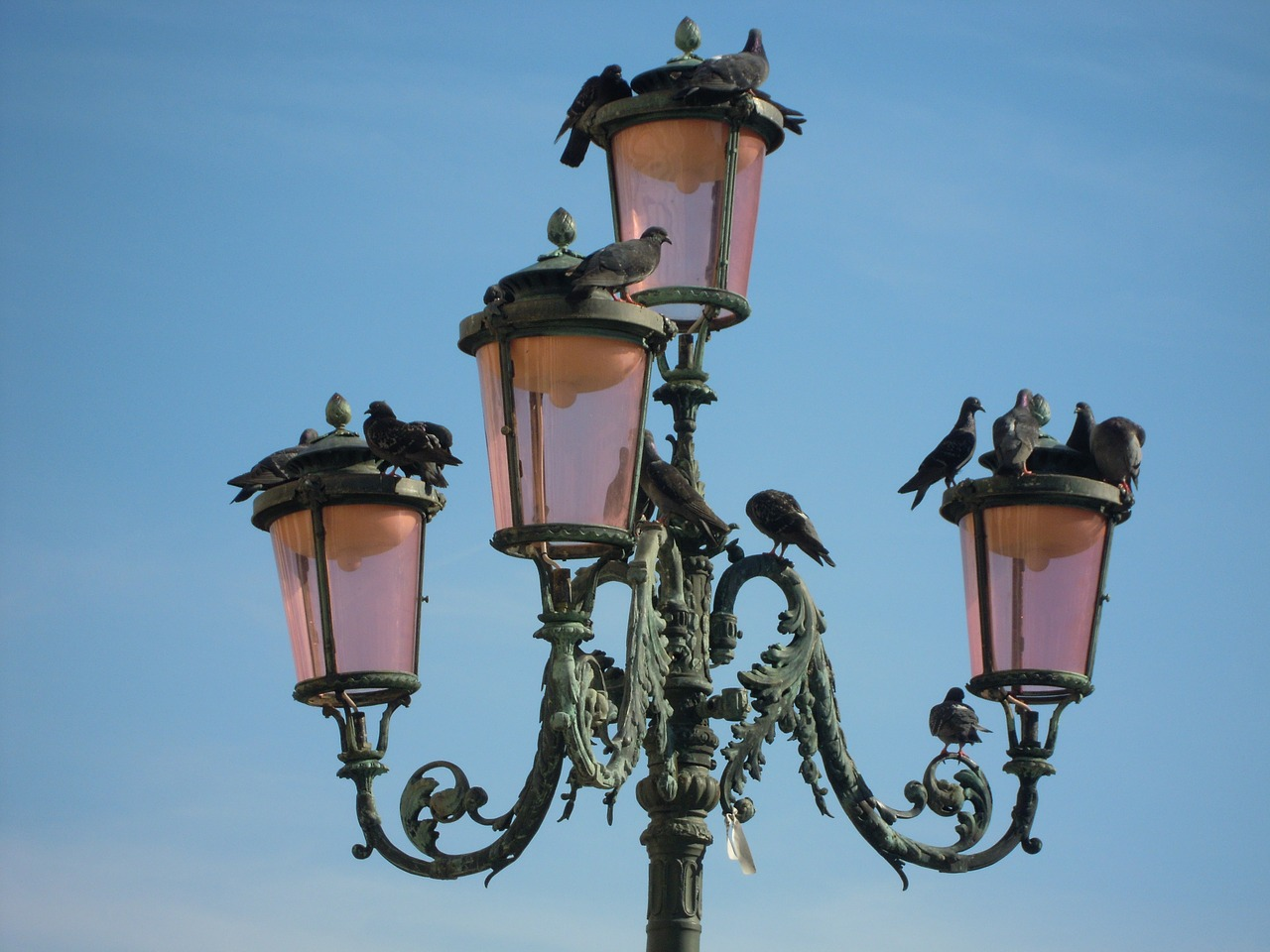 venice piazza san marc pigeons free photo