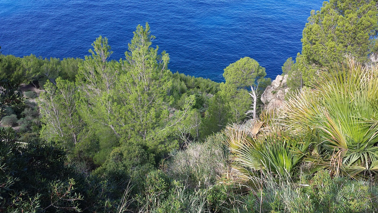 view to the sea landscape mallorca free photo