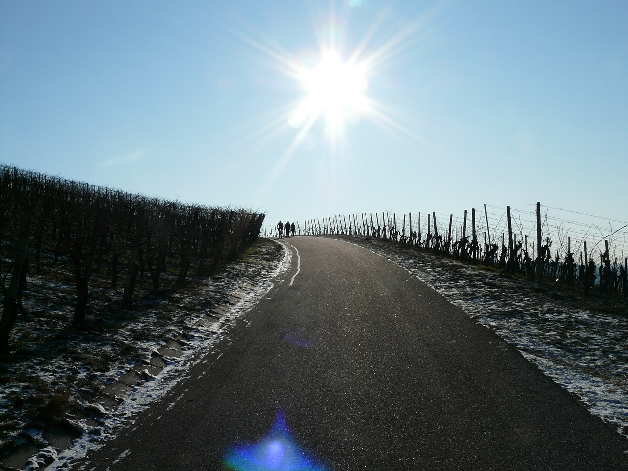 vineyard winter vine free photo