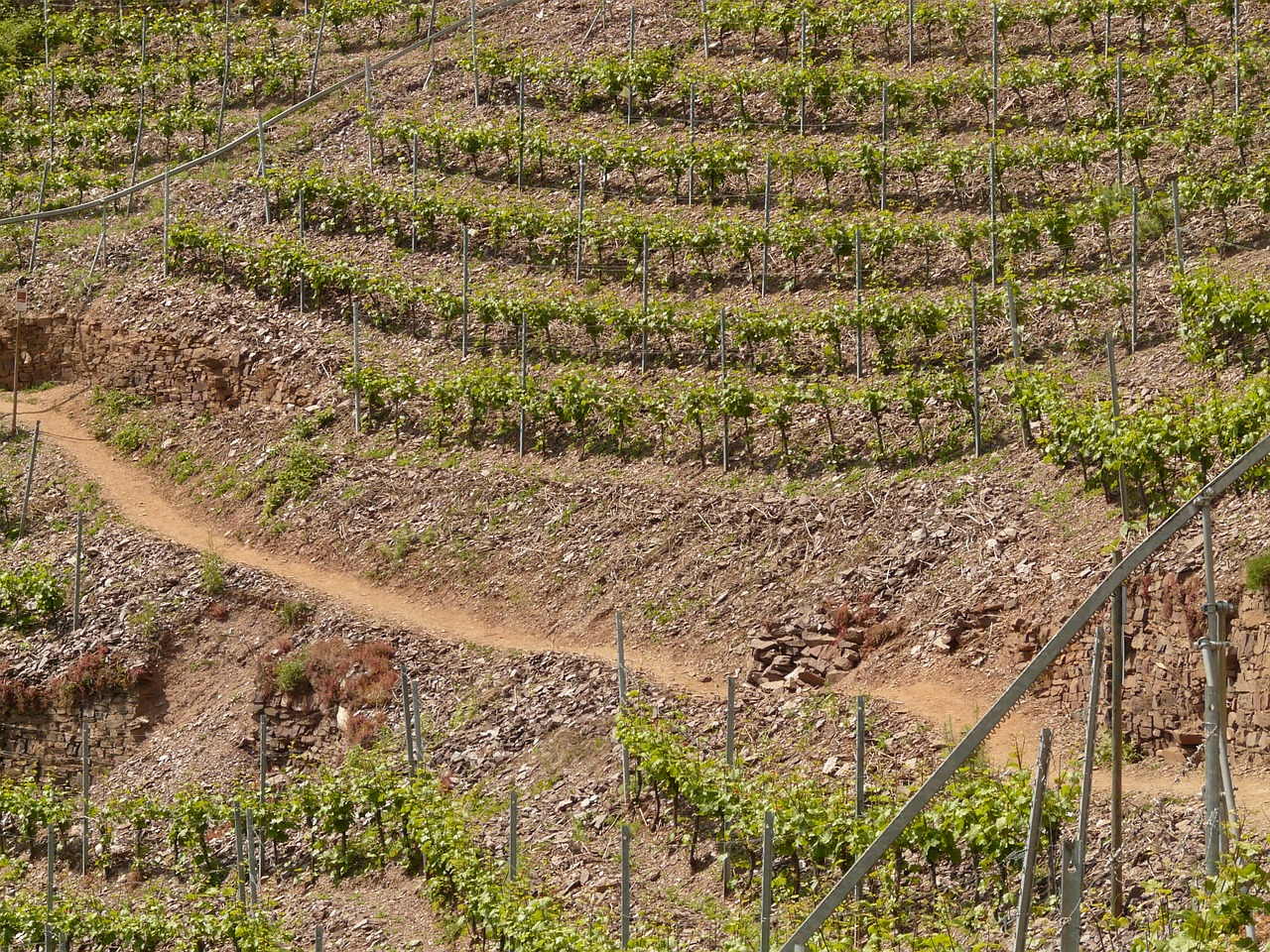 vineyard steep slope winegrowing free photo