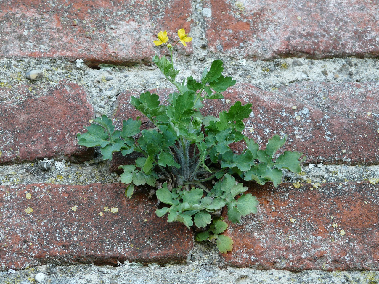 wall fouling plant free photo