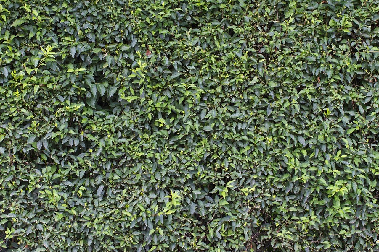 Wall Green Leaves Sheet Garden Free Photo From Needpix Com