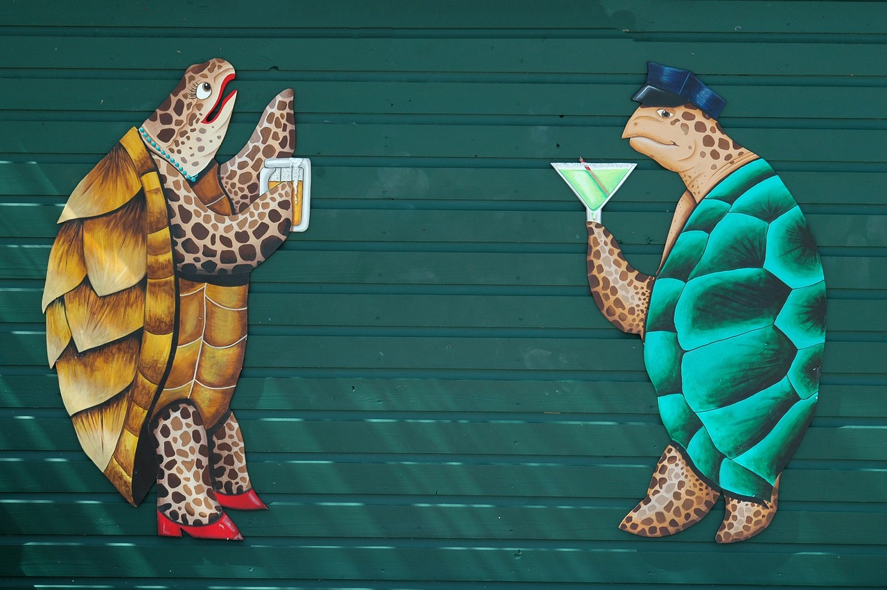 wall mural graphic art turtle free photo