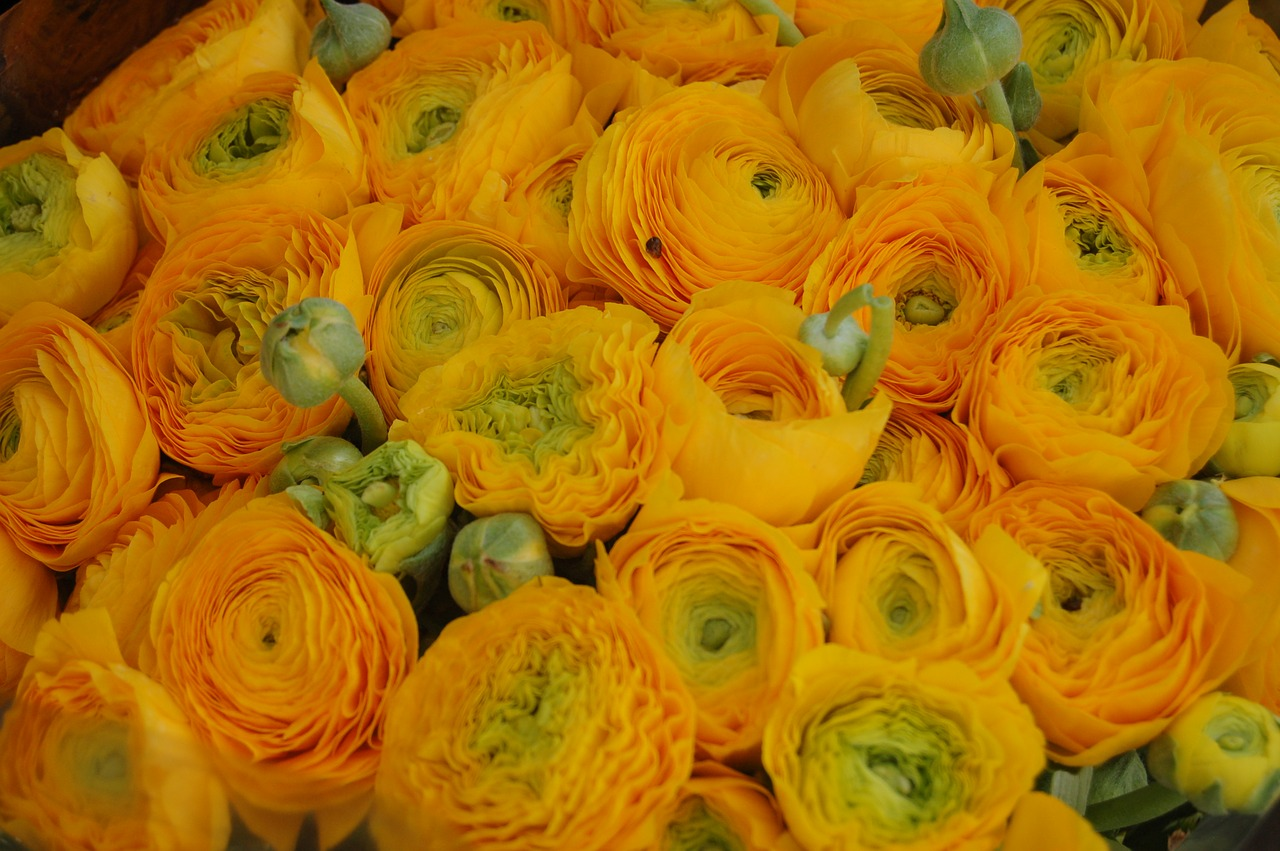 Wallpaper Yellow Color Flower Flowers Free Pictures Free Image