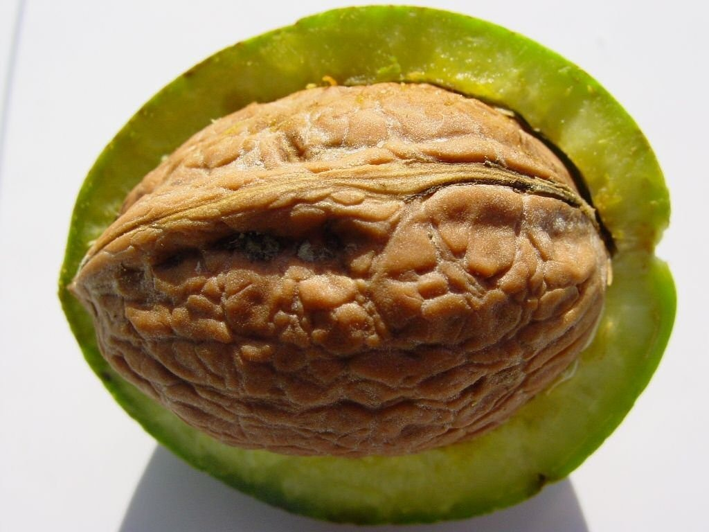 walnut shell nuclear free photo