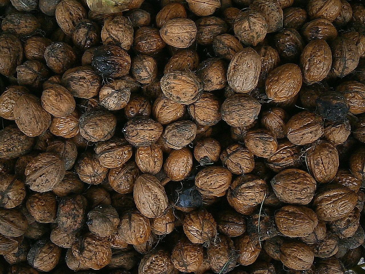 walnut nuts nut free photo