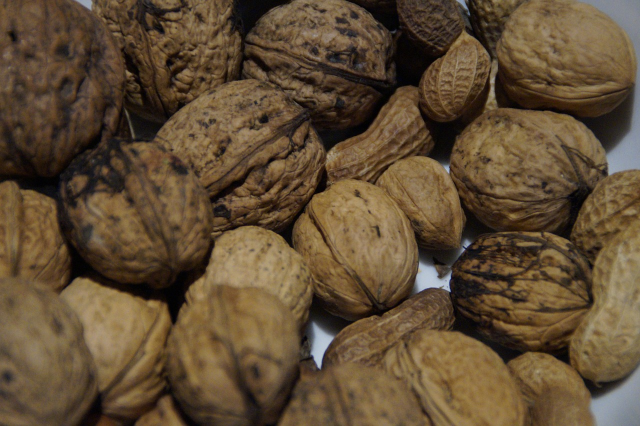 walnuts nuts nut free picture