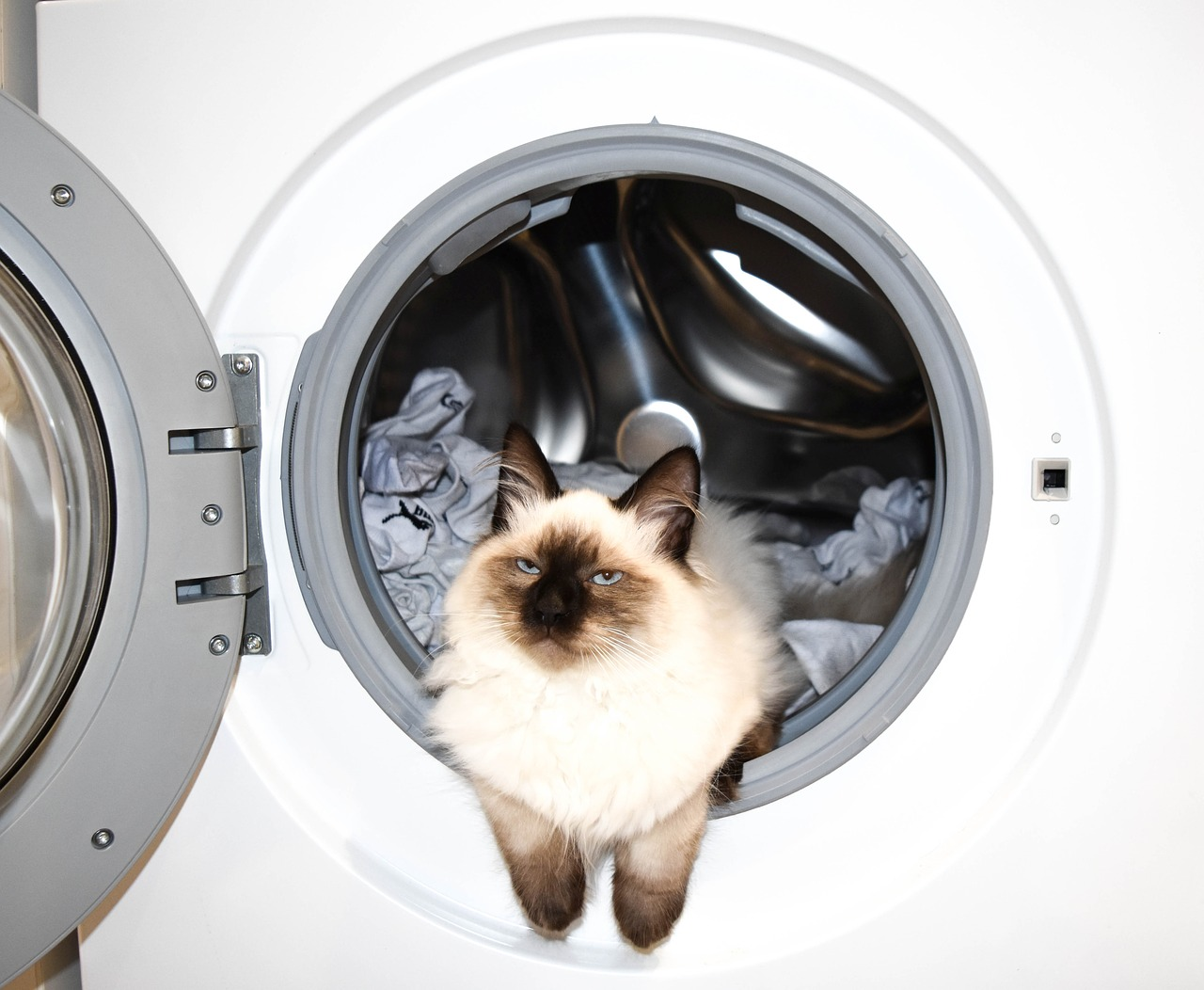 washing machine  wash  cat free photo