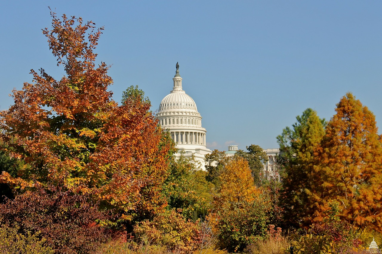 washington dc,capitol,architecture,sky,clouds,fall,autumn,trees,foliage,colorful,beautiful,urban,city,cities,free pictures, free photos, free images, royalty free, free illustrations, public domain