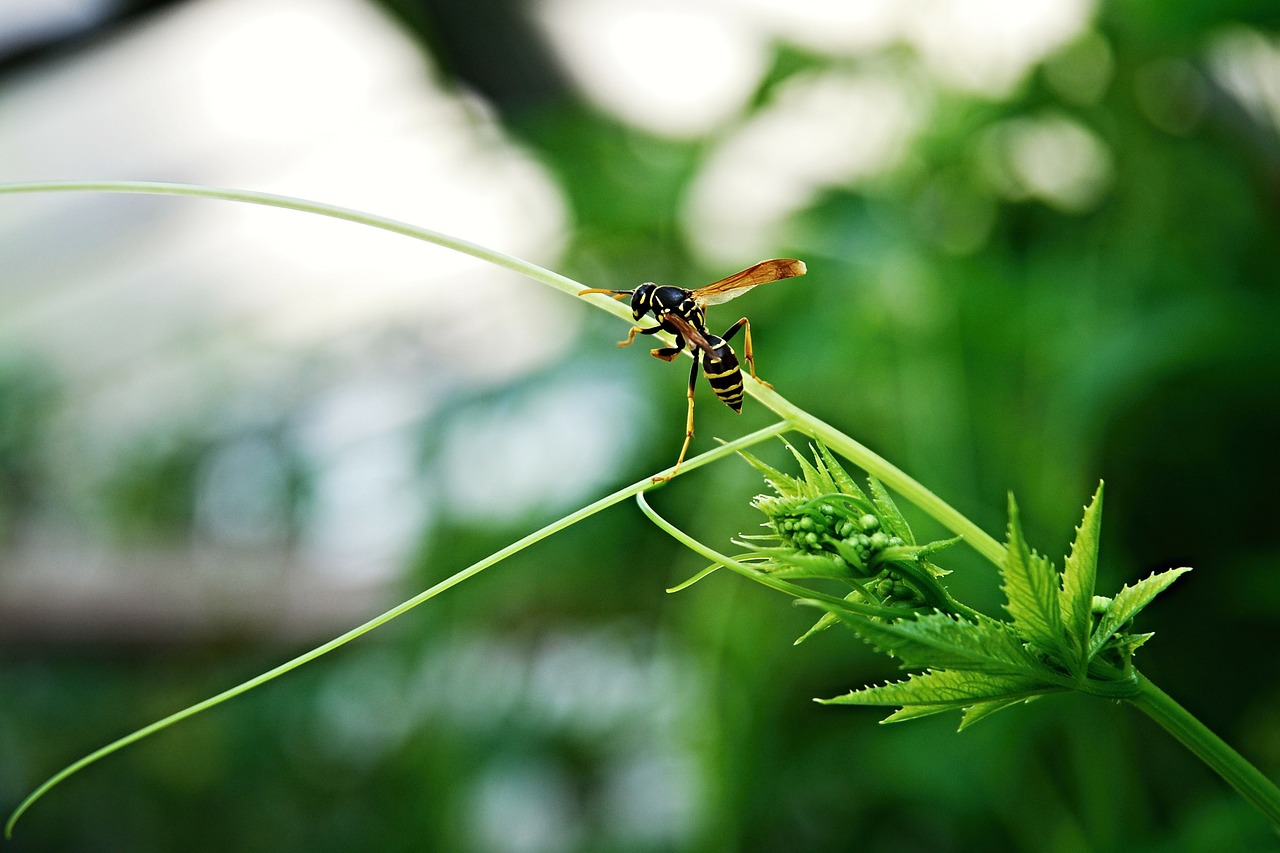 wasp insect greenhouse free picture