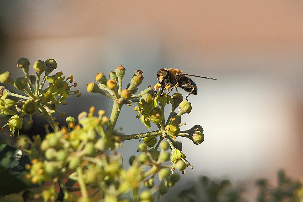 wasp insect close free photo